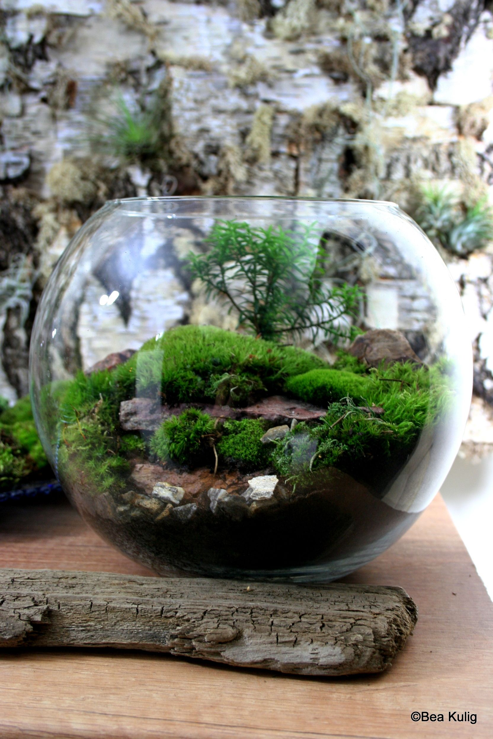 Pin By Miselissa Bee On Flower Power Mini Terrarium Bottle Garden