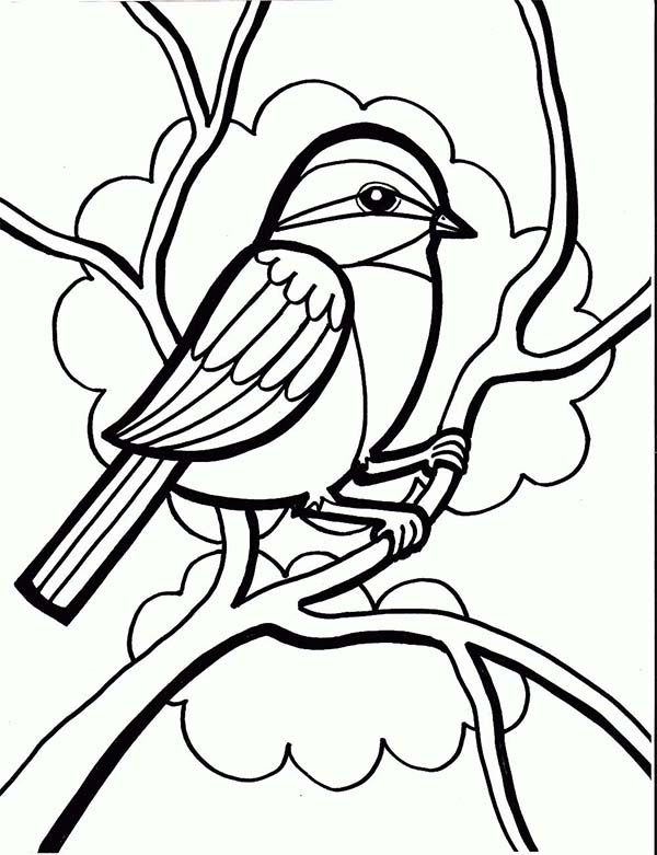 Chickadee, : Chickadee Drawing Coloring Page | birds | Pinterest ...