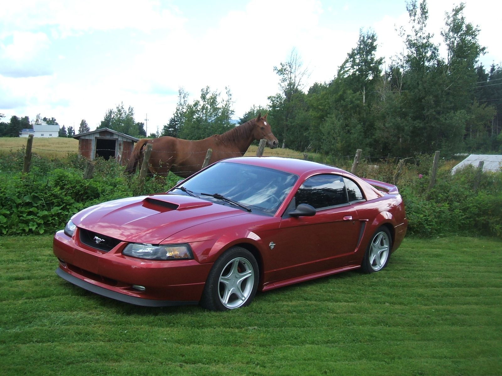 Ford Mustang 1999 Ford Mustang Gt Coupe Pictures 1999 Ford Mustang 2 Dr Gt Coup Mustang Mustang Cobra Ford Mustang