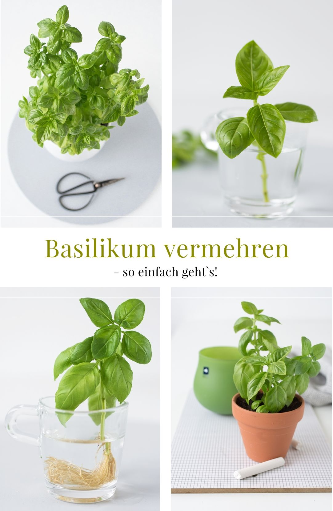 Einfaches Bewässerungssystem für Kräuter + Basilikum selbst vermehren! #howtogrowvegetables