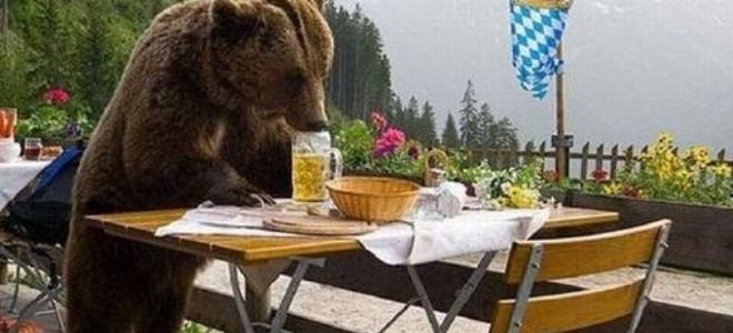 Τέσσερις αρκούδες μπήκαν στο δωμάτιο τουριστών και τα... έτσουξαν!