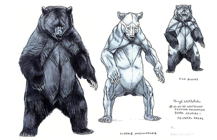 reference bear - Google 検索 | 動物 骨格 | Pinterest | Anatomía ...