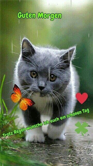 Guten Morgen Katzenbild Mit Bildern Lustige Guten Morgen