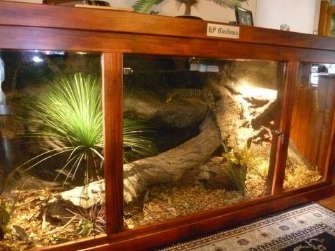 a HP Customs Low Line enclosure for a Monitor Lizard ...