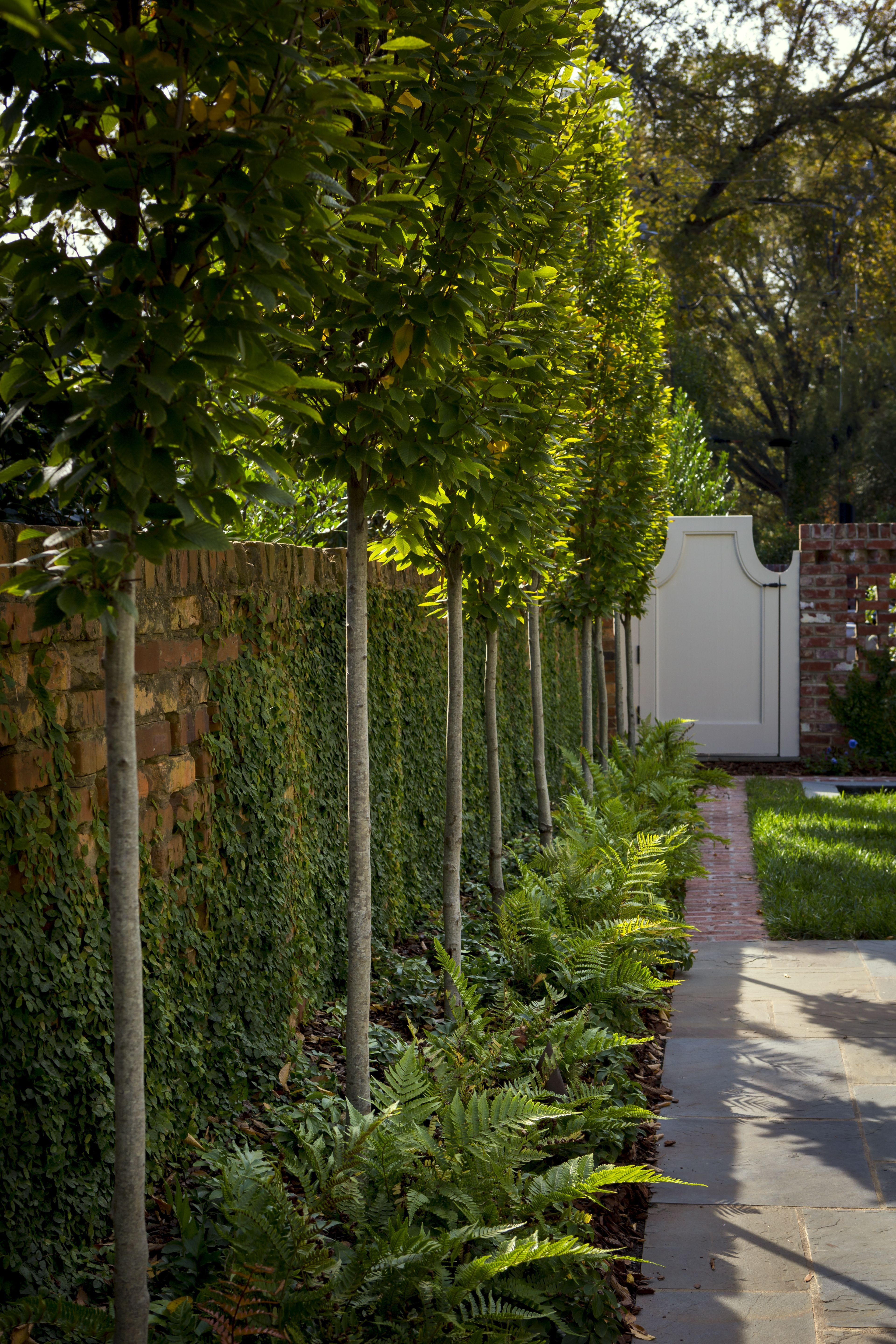 Columnar European Hornbeam Trees Line The Edge Of This Courtyard Elongating The View And Compliment In 2020 Columnar Trees Outdoor Gardens Design Courtyard Landscaping