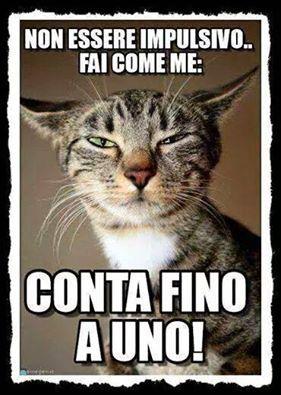 Le Chicche Di Zia Fedora Fb My Cats Board Pinterest Humor