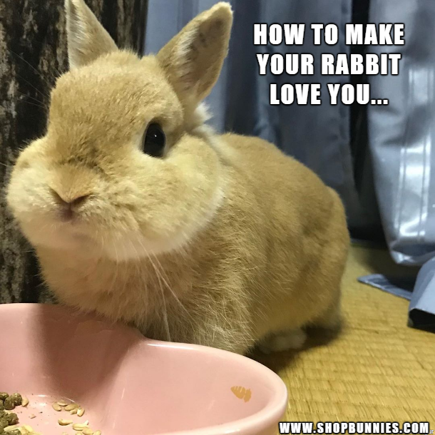 How do you make your rabbit love you? Cute baby bunnies