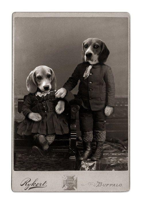 The Beagles Of Buffalo By Jhovenstine On Etsy Cute Beagles Beagle Beagle Buddies
