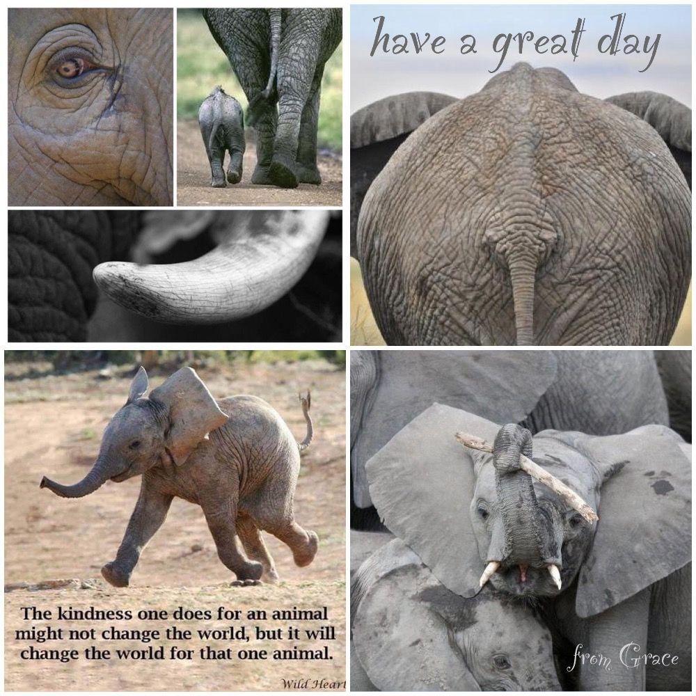 For The Elephants Elephant Good Morning Good Night Elephant Ears