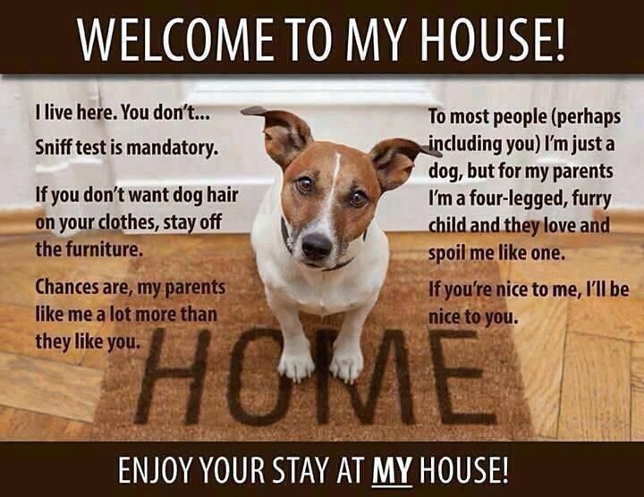 Welcome To My House Welcome To My House Dogs Dog Rules