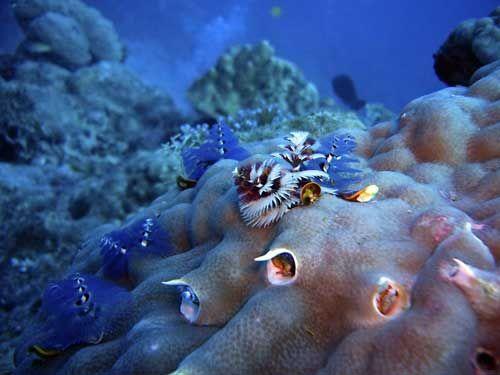 Live rock hitchhikers guide - Saltwater Aquarium Blog   Saltwater aquarium, Fish pet, Aquarium