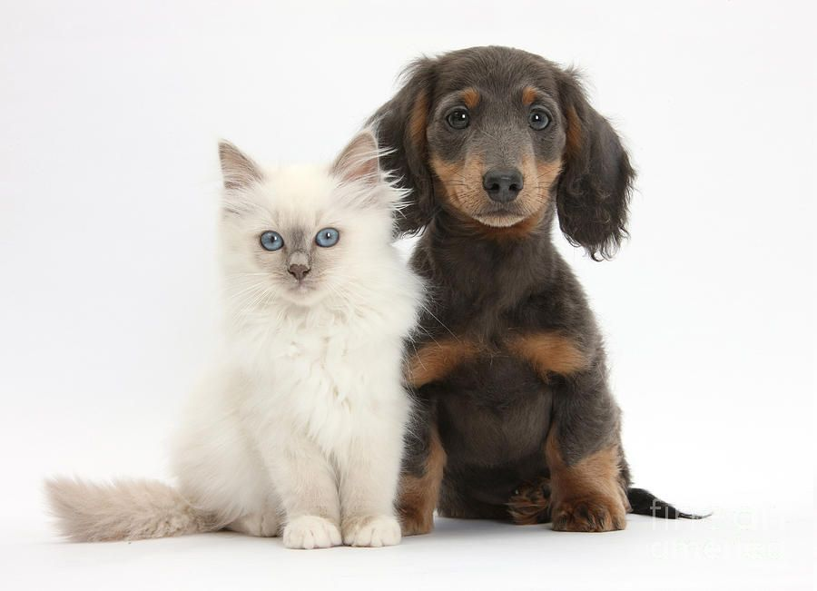 Kitty and doxie