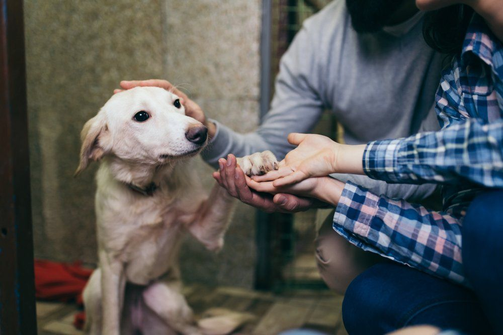 ClearTheShelters campaign Over 1800 pets have been