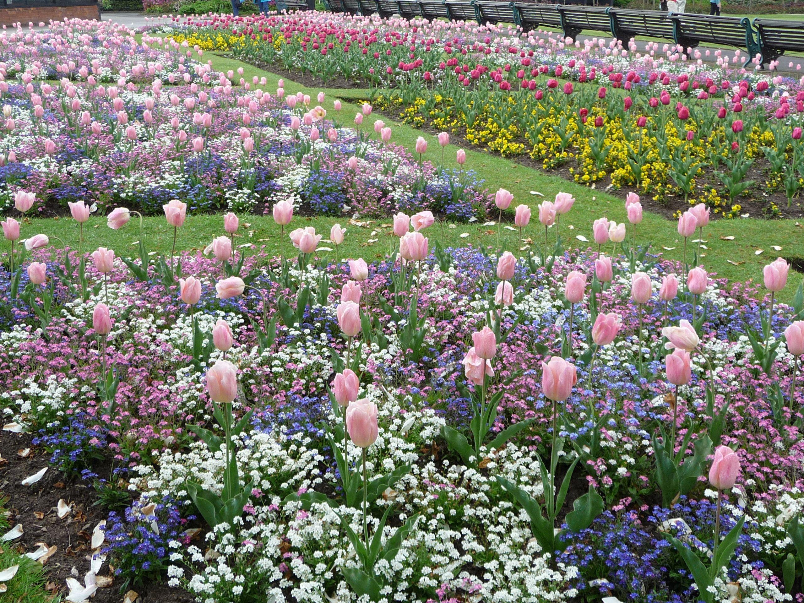 Victoria park stafford spring flowers staffordstafordshire flower mightylinksfo