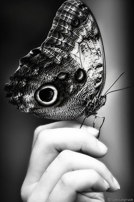 """""""Trust"""" - Black and White Nature Photography by Lynn Langmade - monochrome photo of a large black, white and silver butterfly on a child's hand."""