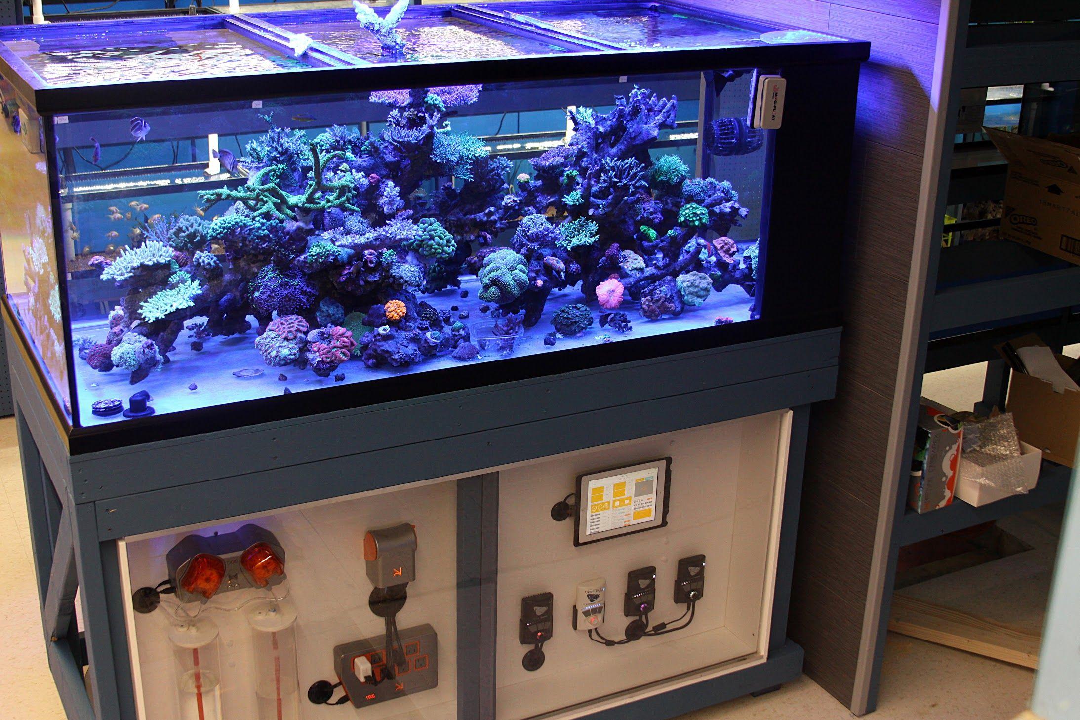 Tank Parameters Of Some Masters Aquarium Sump Aquarium Systems Marine Aquarium