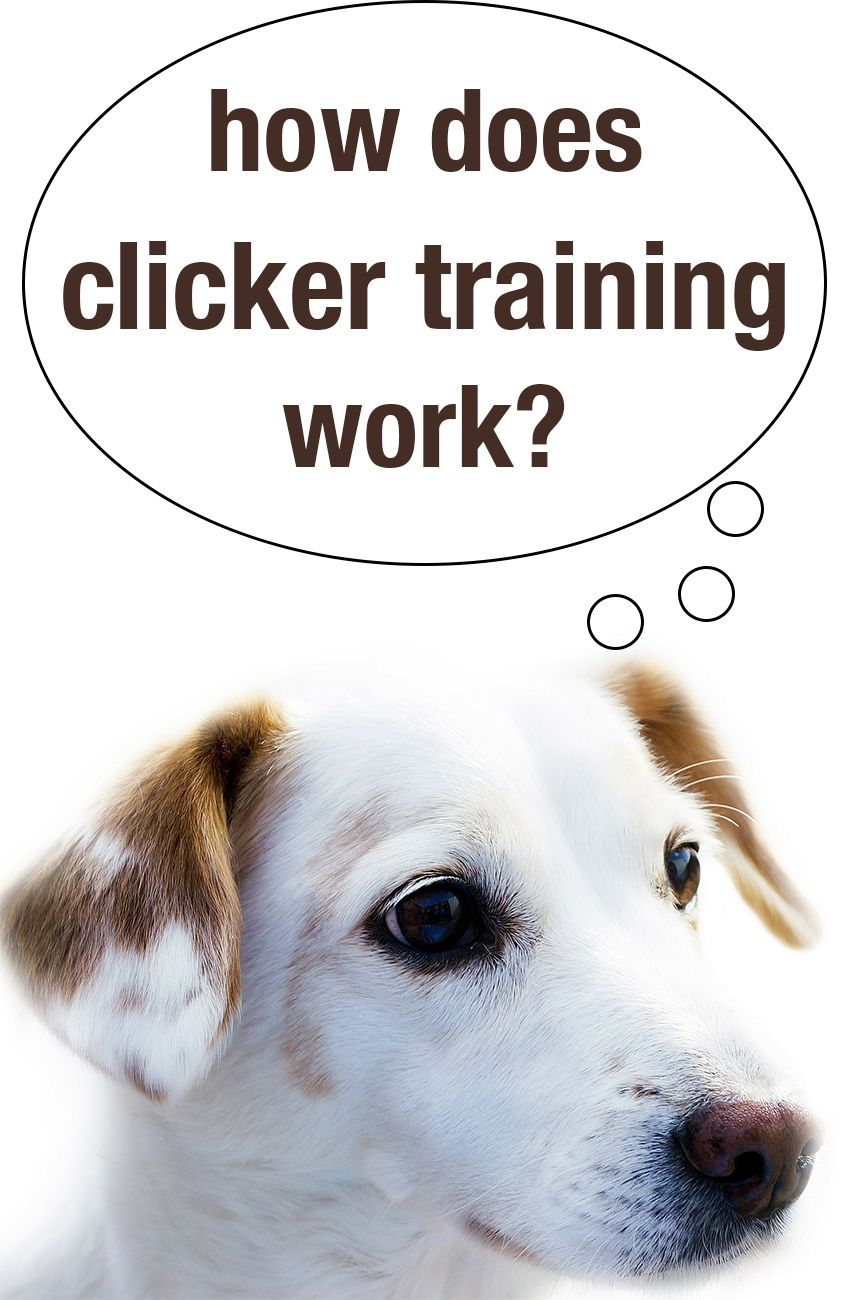 How Does Clicker Training Work Dog Clicker Training Training