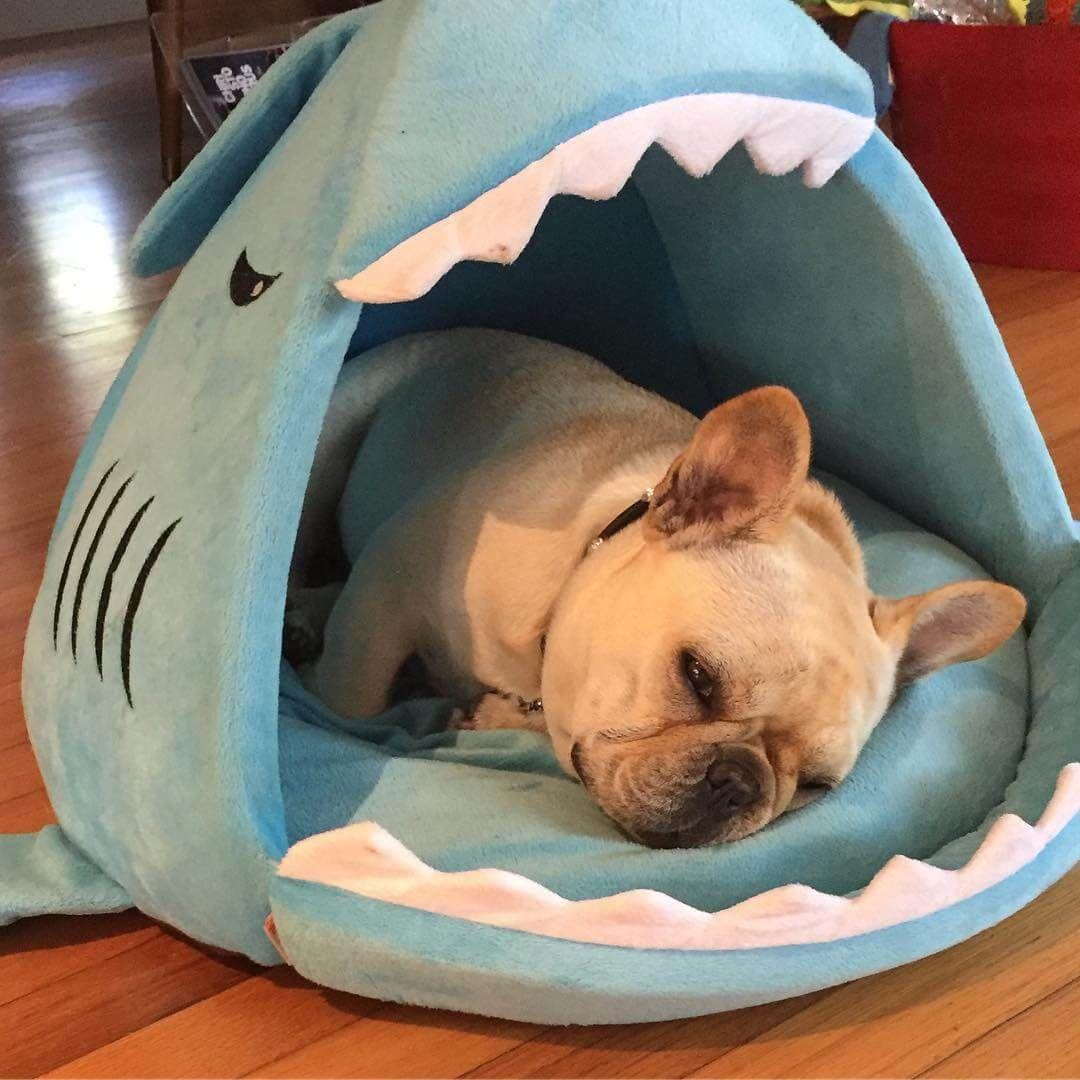 Frenchie House Shark Washable French Bulldog Bulldog Puppies