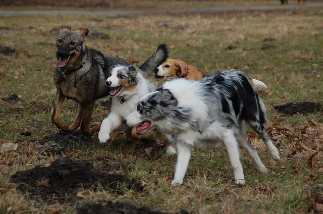 10 Simple Things That Could Add Years To Your Dog S Life Pet Insurance Reviews Pets Animal Law