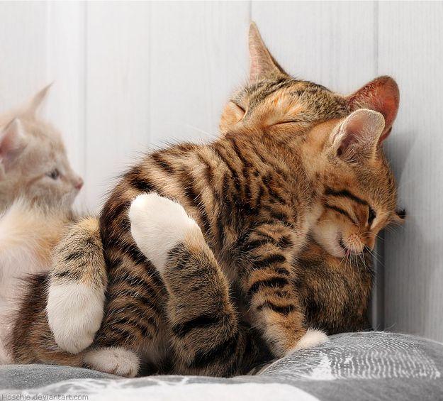 These Cats Tiere Susse Tiere Katzen