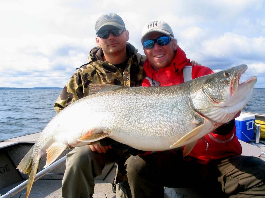 Trout lake salvelinus namaycush big fishes huge world for Fish in lake superior