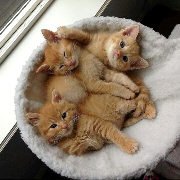 Best Gift For The Cat Lover Tshirt Unique For Women T Shirt By Ioema In 2020 Schattige Kittens Schattige Babydieren Schattigste Dieren
