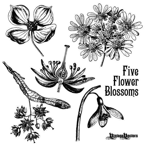 70 Free Graphics Vintage Vector Flowers And Floral Ornament Sets Ilustraciones Ilustraciones De Flores Dibujos