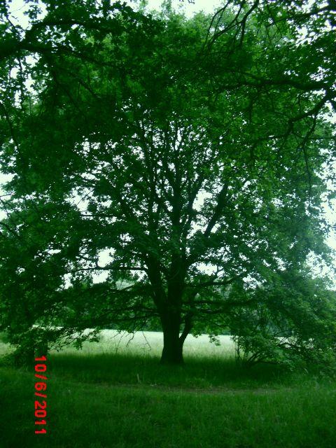 Baum/Sommer