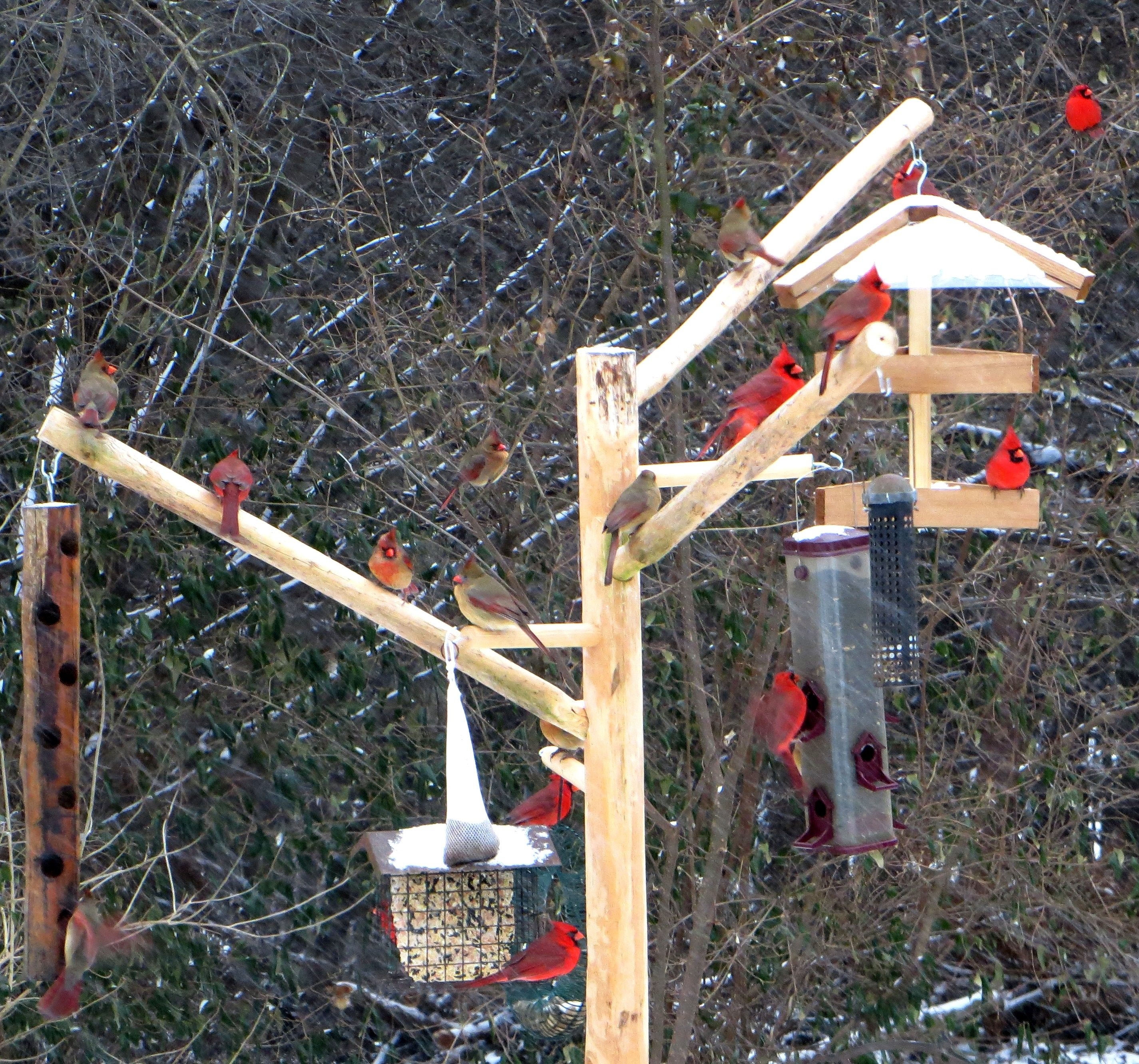 feeder yard garden forum proof to bird squirrel how corn trees back feeders