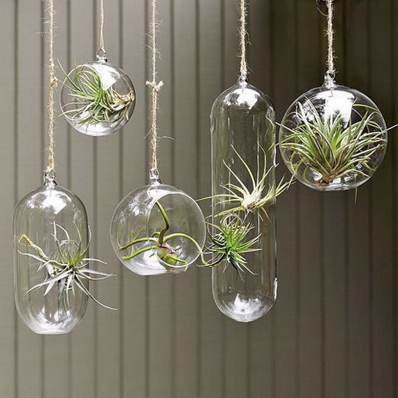 Air plants chandelier urban eden terrariums pinterest air air plants chandelier aloadofball Image collections