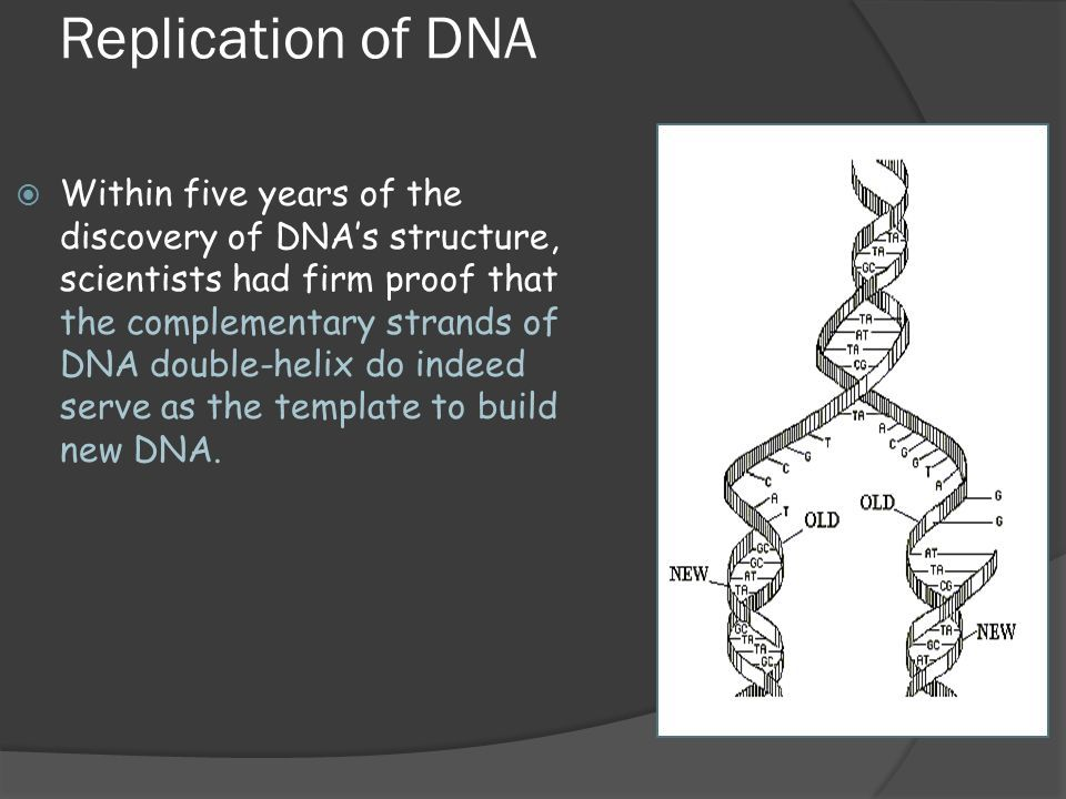 Image Result For Dna Double Helix Diagram Black And White Branding
