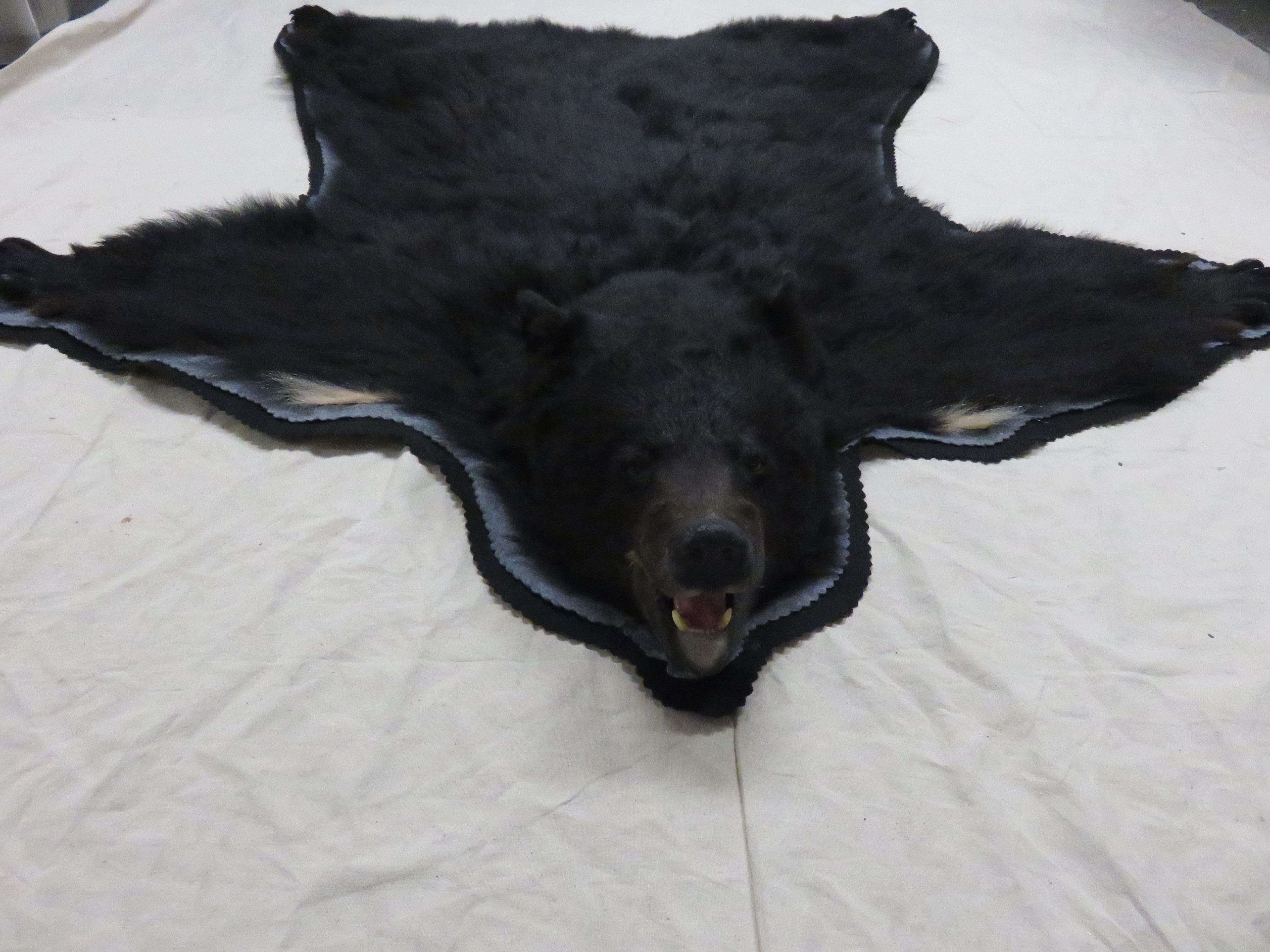 Beautiful Polar Bear Skin Rug With A Nicely Mounted Head Already Prepared And Reinforced Red Back Felt Which Is Well To Be
