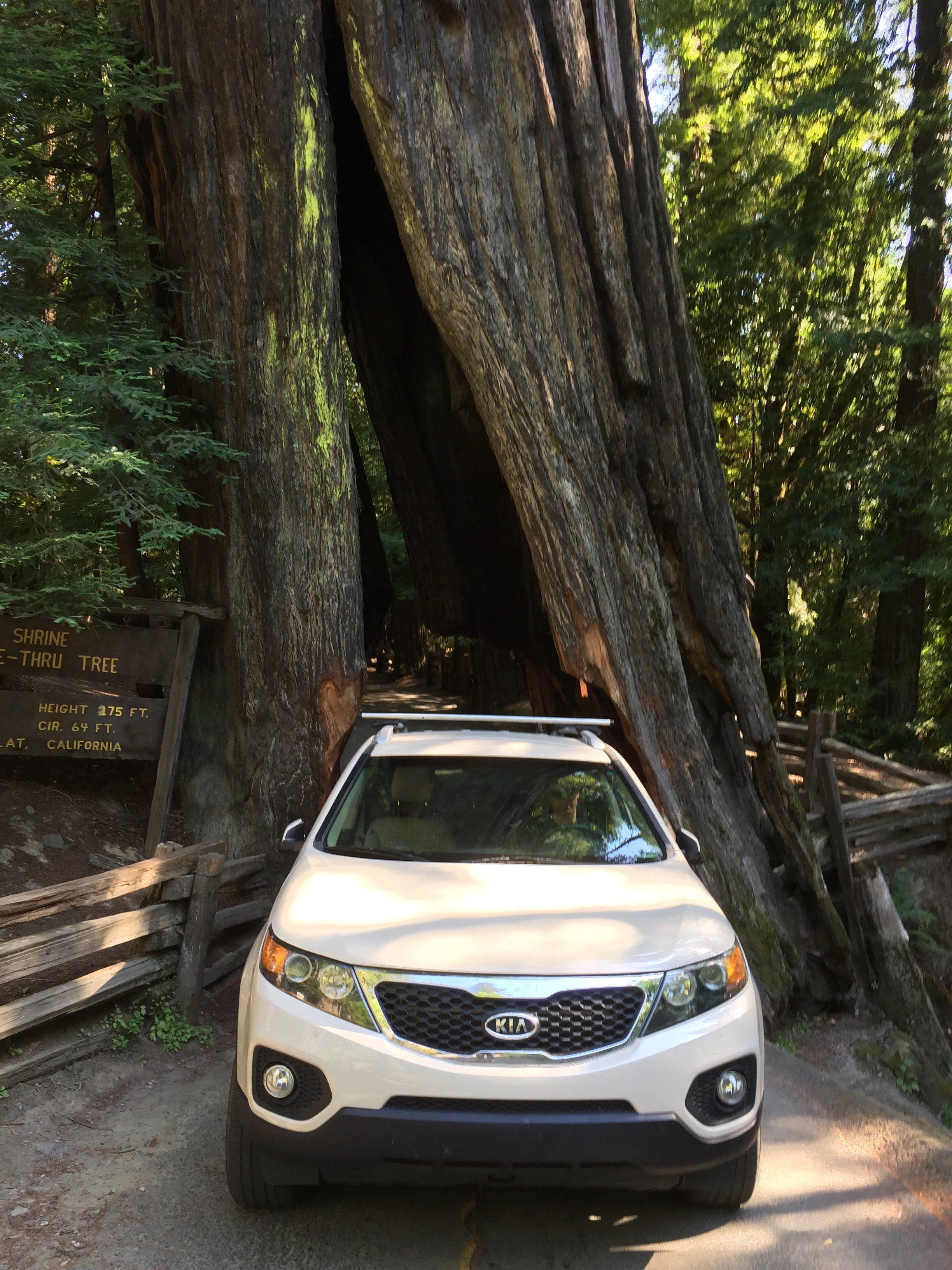 Drive-Thru Trees Along the Redwood Coast in Humboldt ...