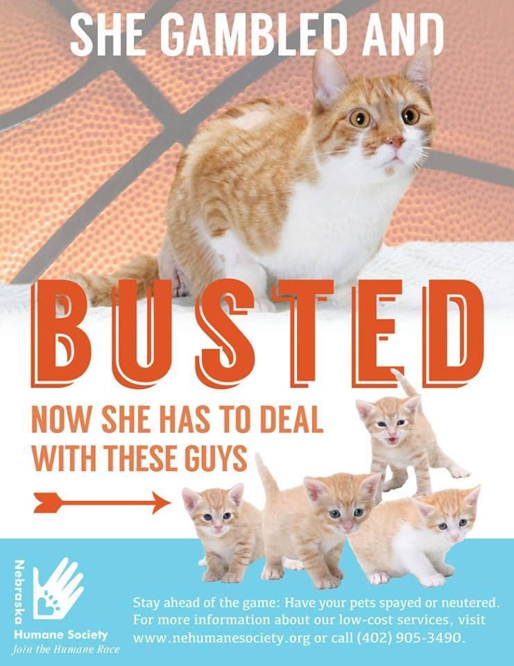 9 Spay Neuter Promos That Will Make You Lol Aspca Professional Your Pet Humane Society Neuter