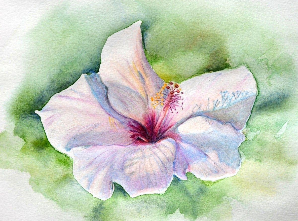 Peindre Une Fleur D Hibiscus Aux Crayons Aquarellables Aquarelle