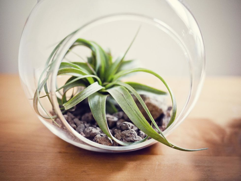 Awesome 10 Plants That Wonu0027t Die On Your Desk At Work