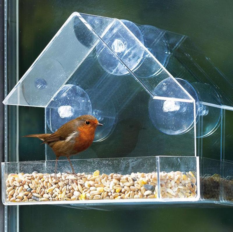 Interaction With Wild Ducks: Bird Feeders, Hanging Bird Feeders, Birds