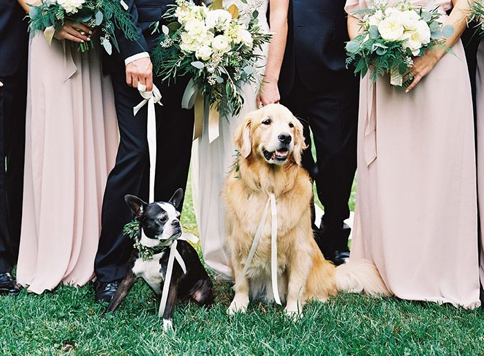 The cutest wedding pups. #dogs