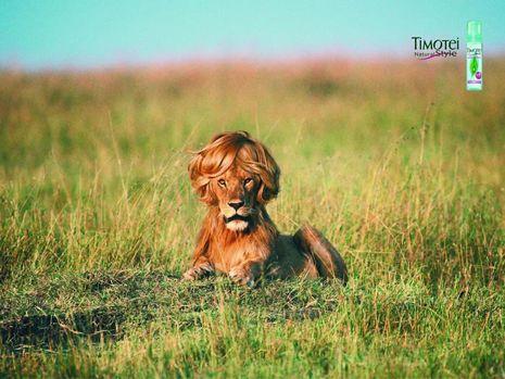 #publicidad gráfica con #animales: champú