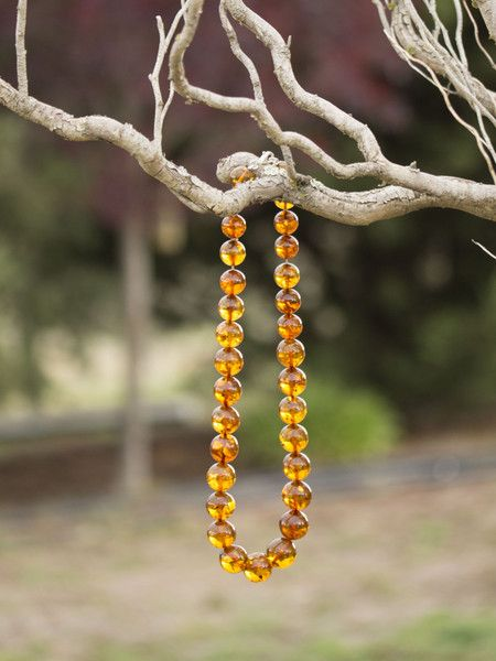 15-19mm Round Baltic Amber Graduated Bead Necklace - Amber Tree