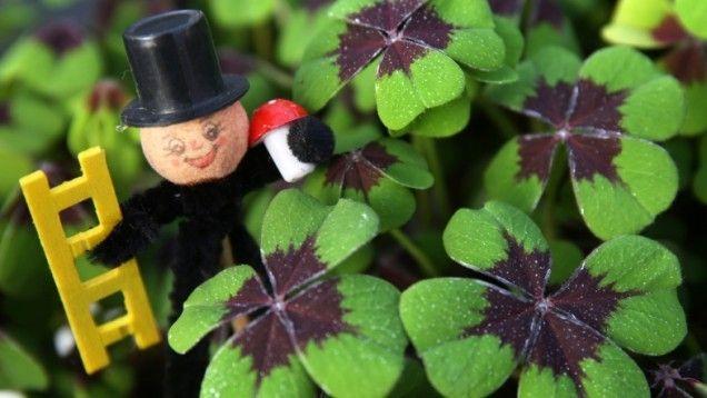 Mitmachen Lohnt Sich Wunsch Dir Was Svz De Gartenkalender Gartentipps Pflanzen