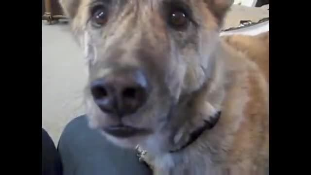Doggies love their treats, but when this dog thought that he may not get some of his favorite things, he reacted in the funniest way. You will love this, and perhaps you may even empathize with this poor pouch.
