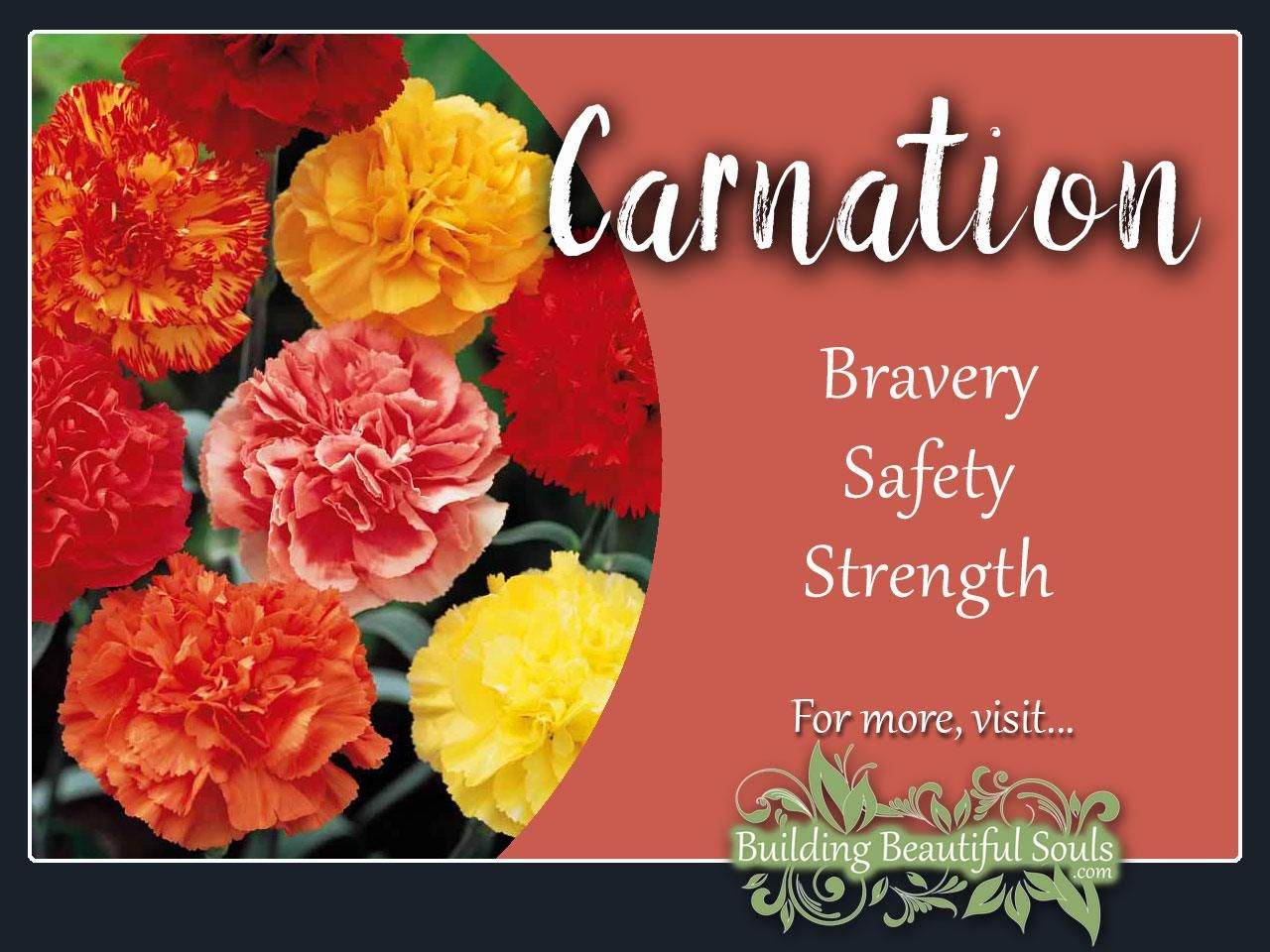 The January Birth Flower Carnation Is A Powerful Flower Delve Deeply Into Carnation Meaning Symboli January Birth Flowers Carnation Meaning Flower Meanings