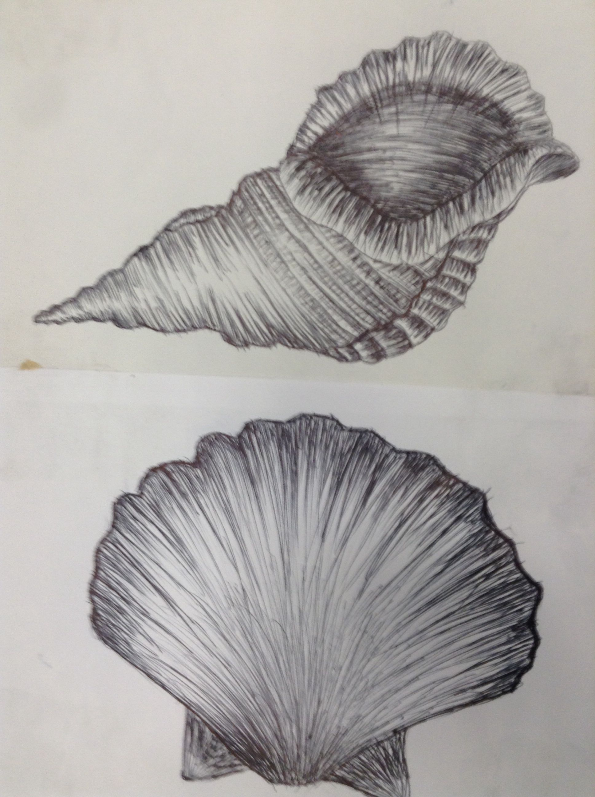 Shells of Drawings forecast to wear in winter in 2019
