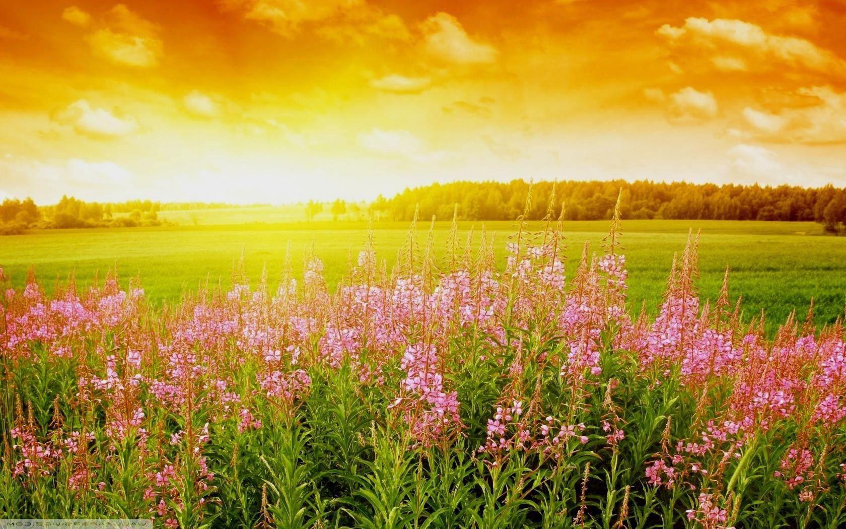 Beautiful Bright Sunrise Summer Day Hd Desktop Wallpaper High Definition Fullscreen Summer Wallpaper Field Wallpaper Sunrise Wallpaper