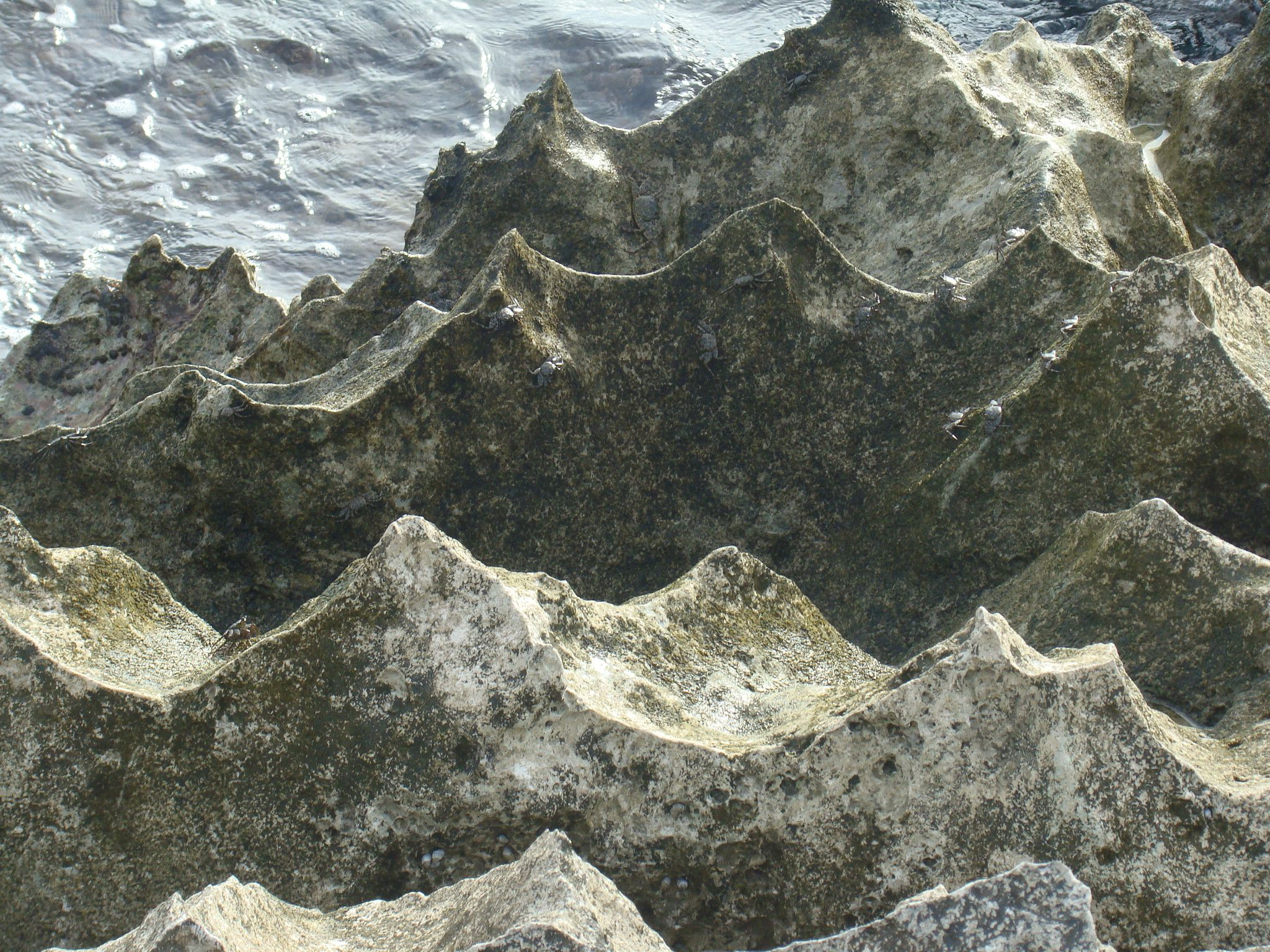 Roca... y cangrejos... los viste?
