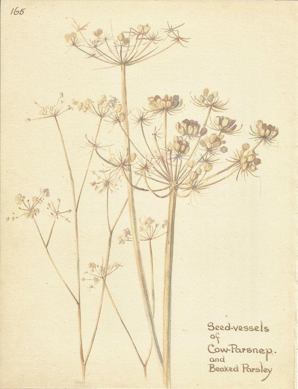 Impresión de la flor  vaca Parsnep  libro por VickiesBeachHouse