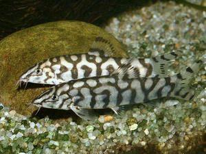 At Aquarist Classifieds Tropical Fish Tanks Cool Fish Fresh Water Fish Tank