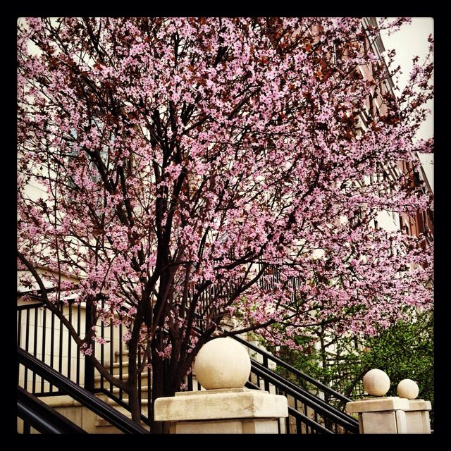 Cherry Hill Nj Events News Schools And Restaurants Cherry Hill Favorite Places All Things New