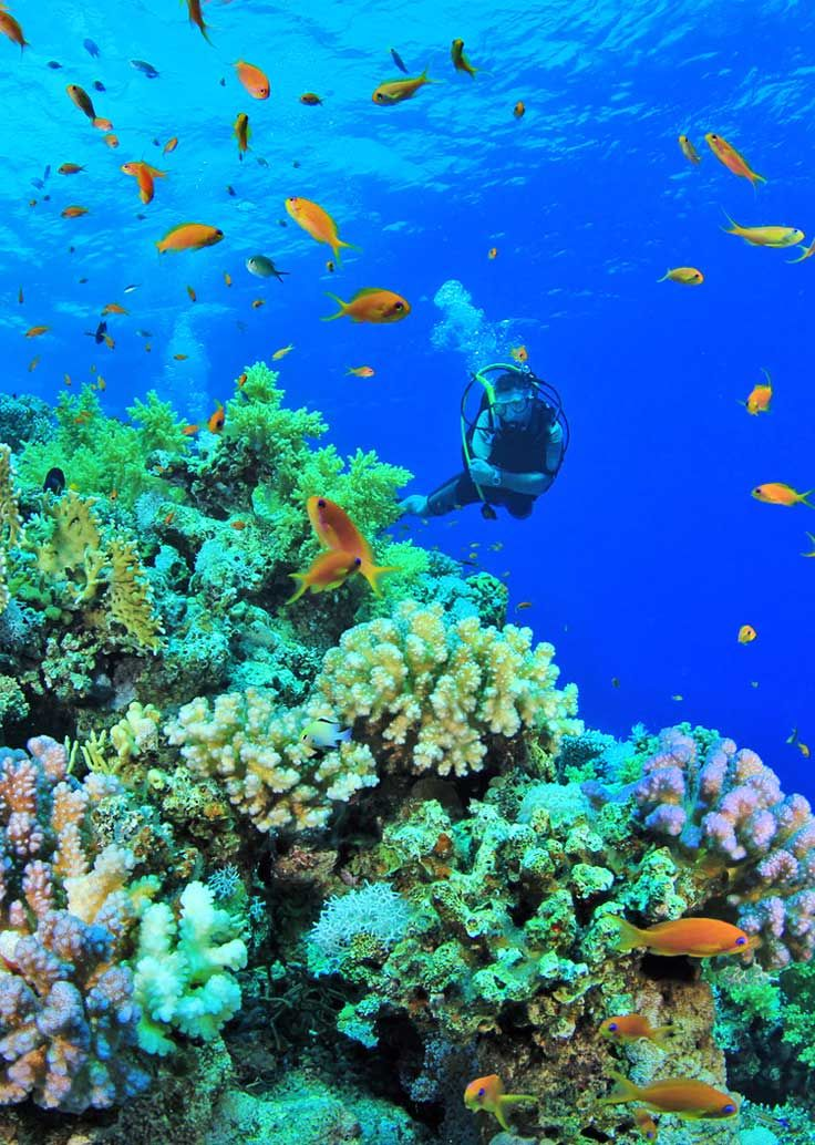 11 Best Places to Learn to Scuba Dive On a Budget ...